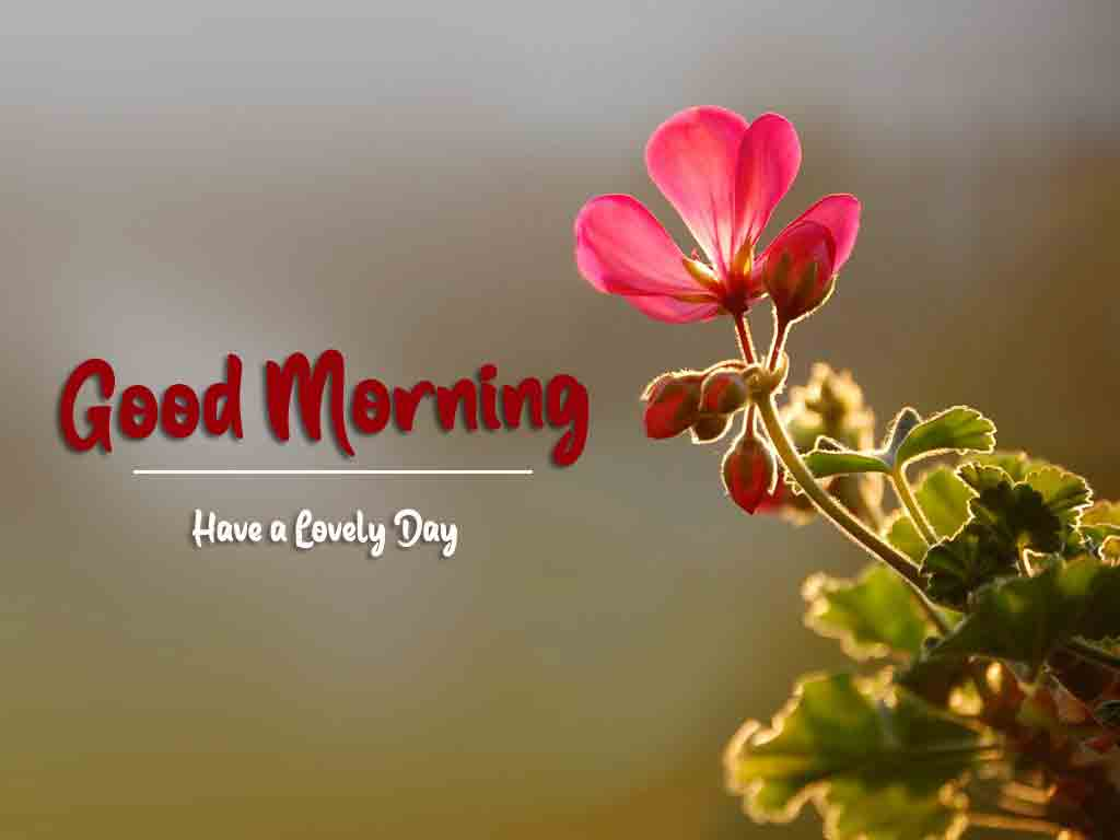 alone flower Good Morning Wishes for girlfriend free download