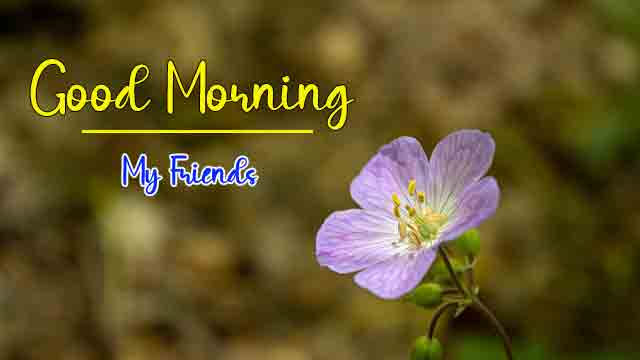 alone flower Good Morning Wishes for girlfriend pics hd