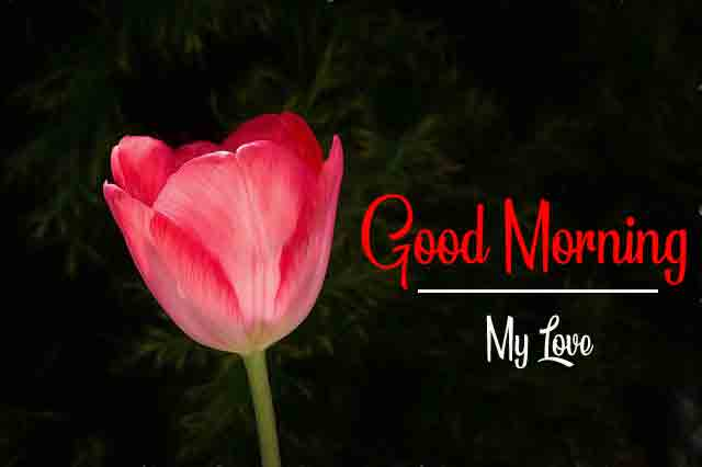 alone red fower Good Morning pics