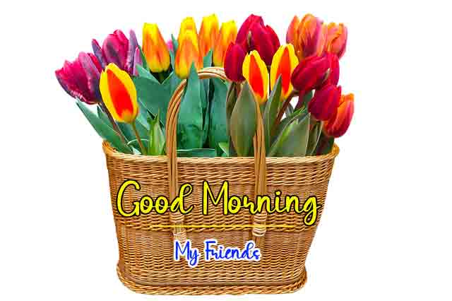 colorful flower Good Morning pics hd