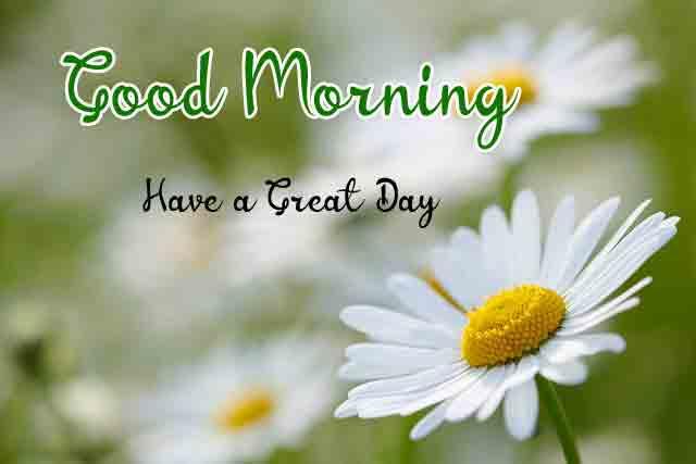 flower Good Morning Wishes for Lover