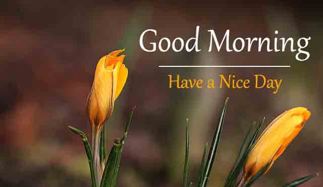 garden Good Morning Wishes for girlfriend pics hd
