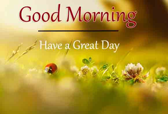 green Good Morning Wishes for girlfriend pics hd