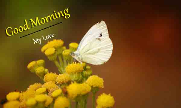 latest Good Morning butterfly images