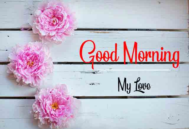 latest Good Morning flower images hd