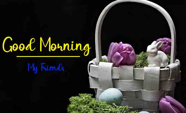 latest flower Good Morning Wishes for girlfriend pics hd