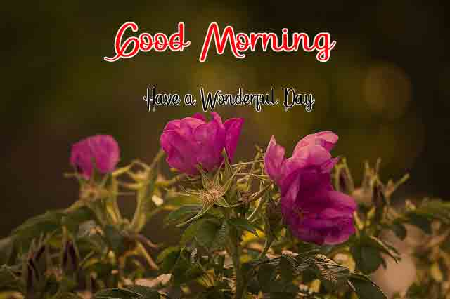 latest garden Good Morning Wishes for girlfriend photo