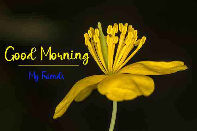 latest yellow flower Good Morning Wishes for girlfriend hd