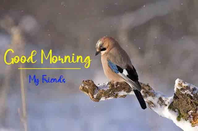 nice bird Good Morning photo
