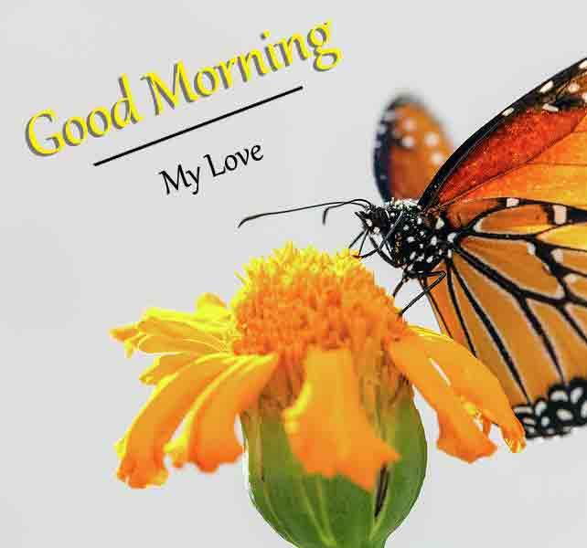 nice colorful butterfly Good Morning pics