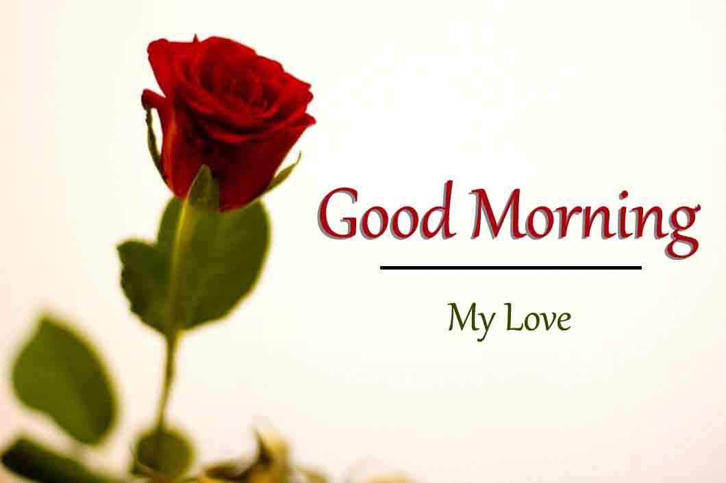 nice rose Good Morning Wishes for girlfriend images hd