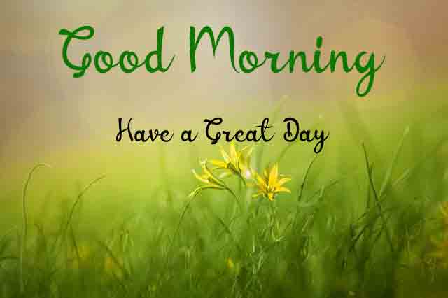 plant flower Good Morning Wishes for girlfriend