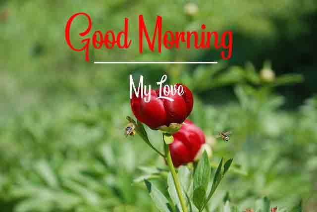 red flower Good Morning pics hd