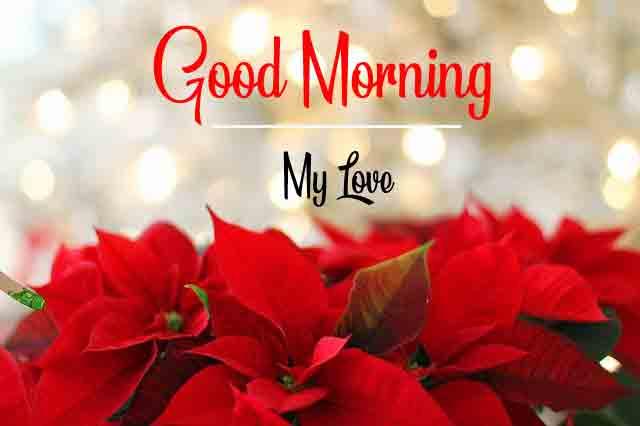 red flower Good Morning wallpaper hd