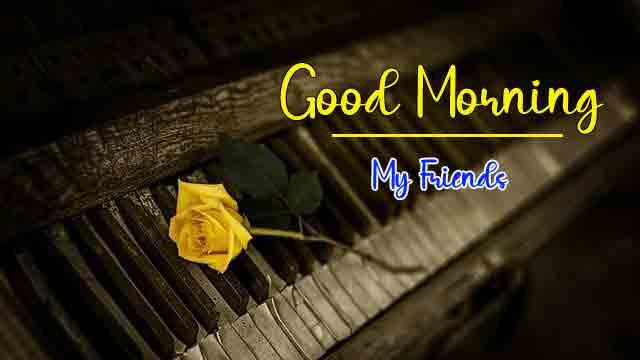 single flower Good Morning pics hd