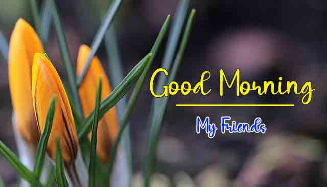 yellow flower Good Morning Wishes for girlfriend pics hd
