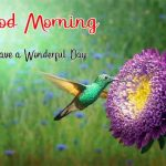 1692+ Good Morning Images HD 1080p Download