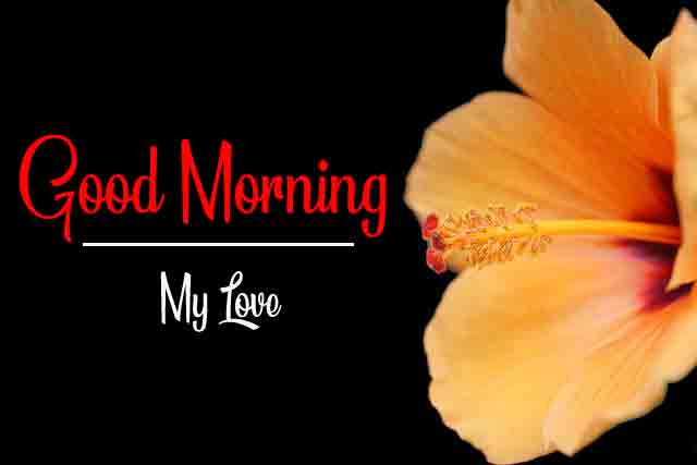 p Good Morning cute flower hd free download