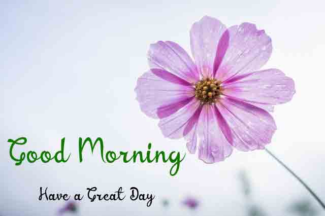 p Good Morning flower images hd