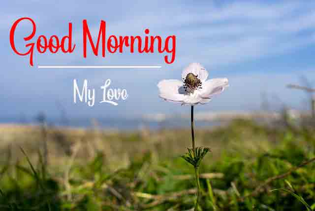 p Good Morning for alone flower hd downlload