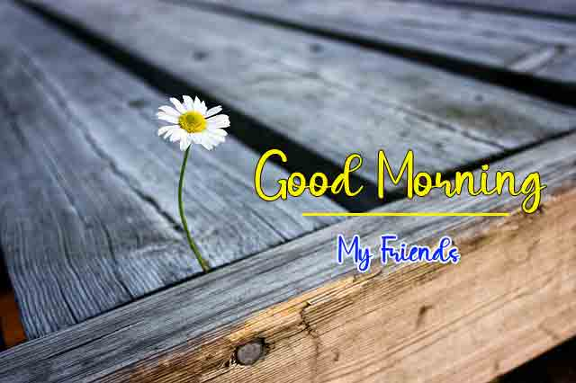 p Good Morning with flower images hd