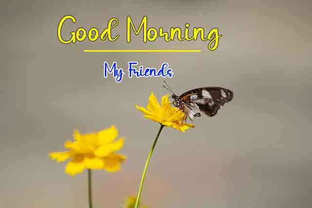 k Good Morning butterfly and flower photo