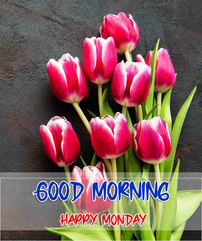 Beautiful Latest Monday Good Morning Images photo download