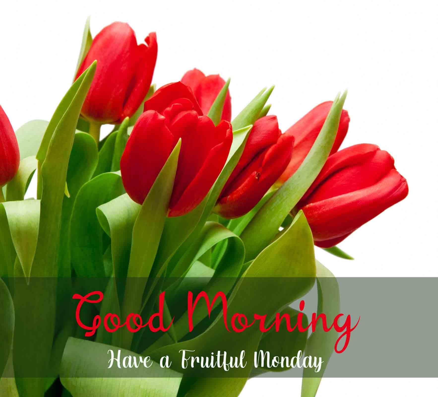 Beautiful Latest Monday Good Morning Images photo free hd
