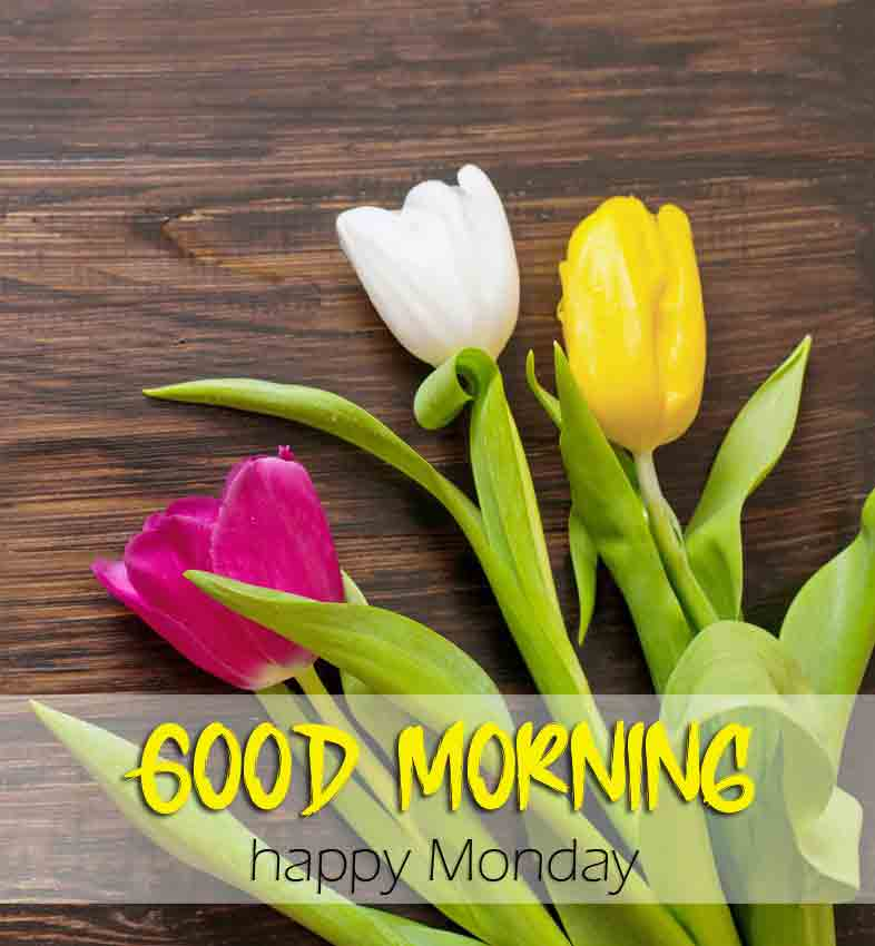 Beautiful Monday Good Morning Images photo for sisterr