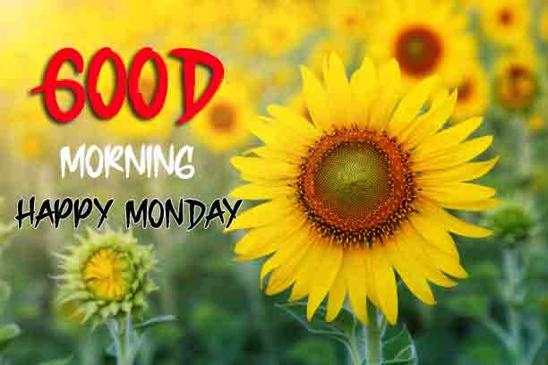Beautiful Monday Good Morning Images photo hd download for friends