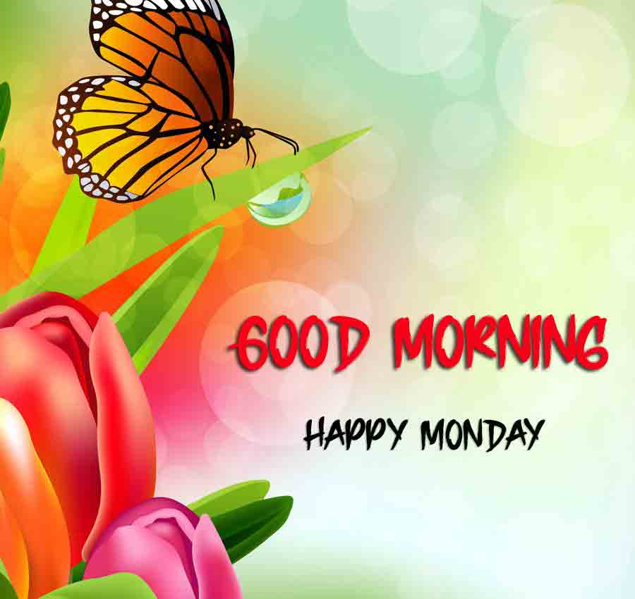 Beautiful Monday Good Morning Images pics for facebook