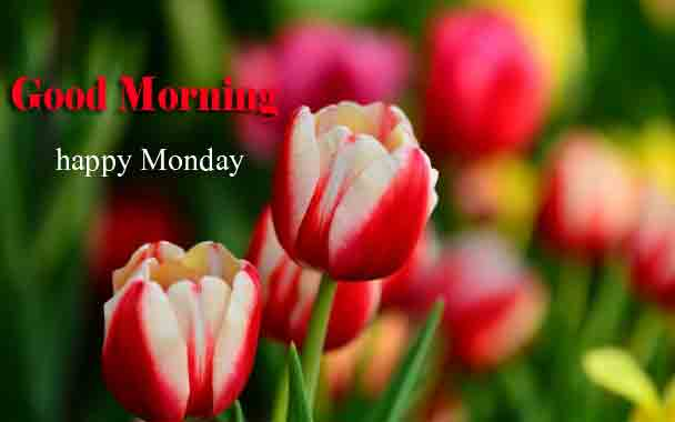 Beautiful Monday Good Morning Images pictures free download