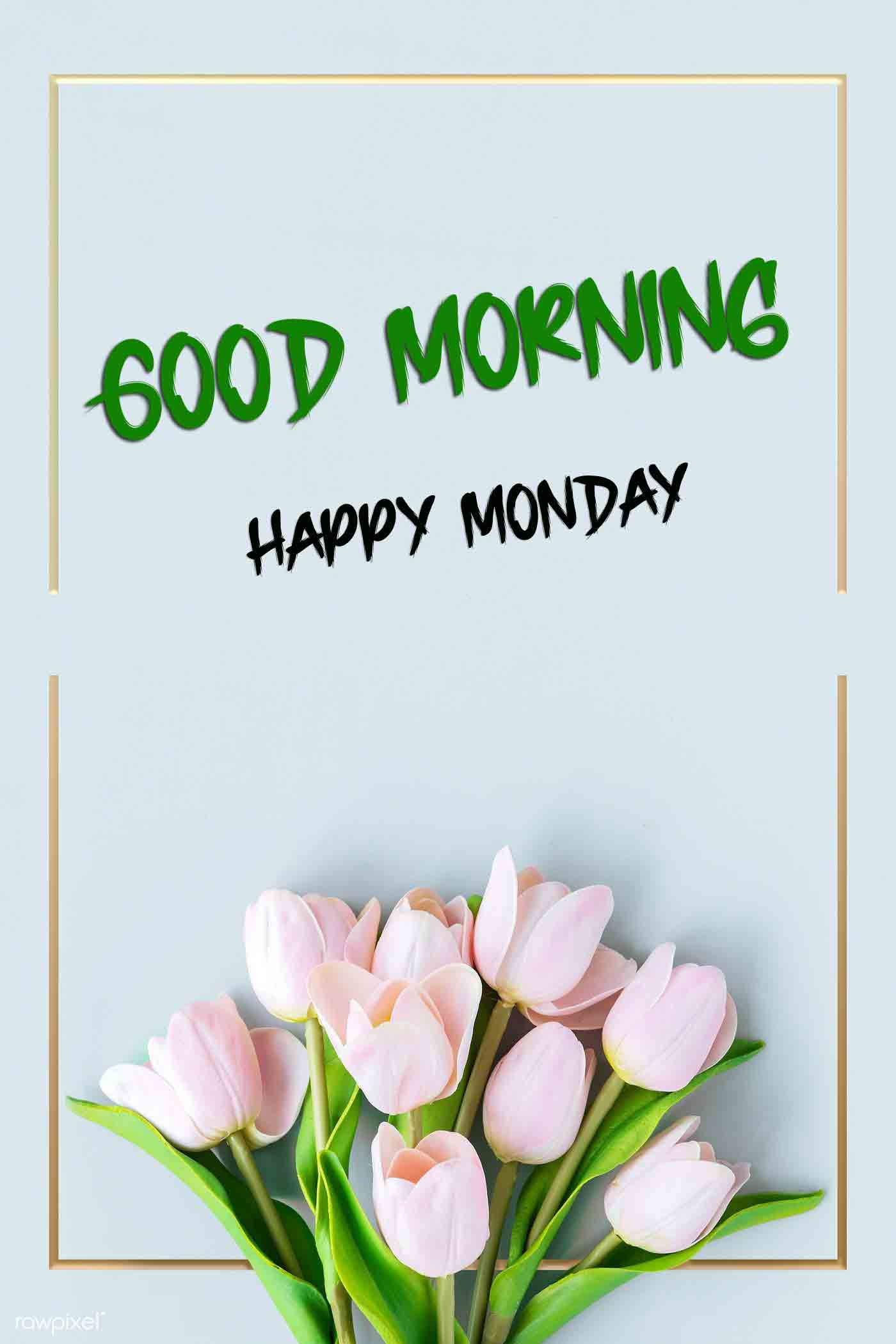 Beautiful Monday Good Morning Images pictures hd download
