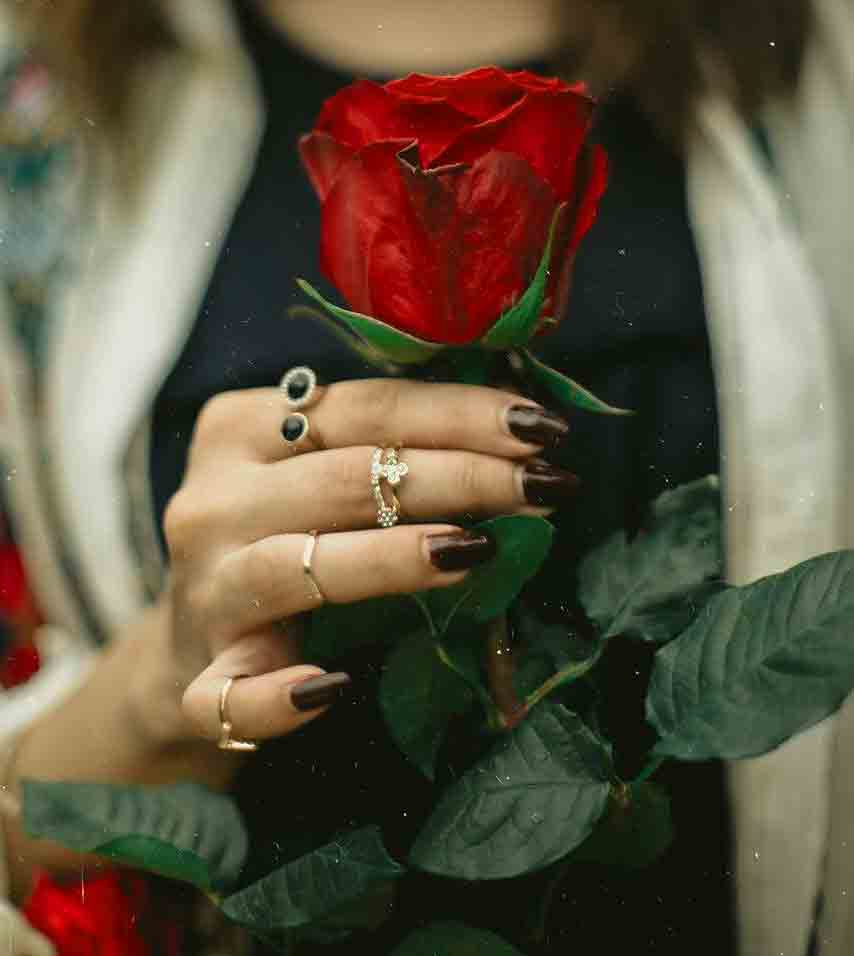 Beautiful Whatsapp Dp Images for rose