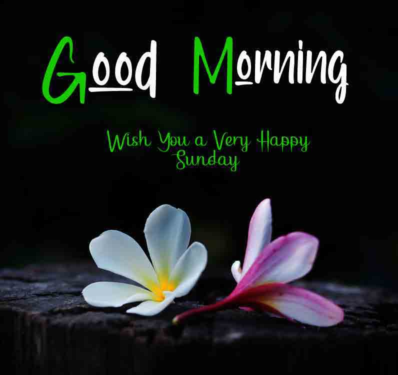 Best Good Moring Happy Sunday pictures free hd download
