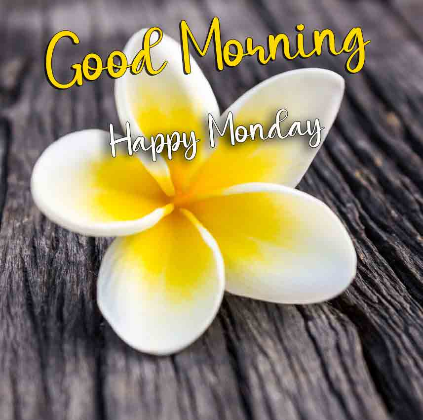Best Monday Good Morning Images for sister