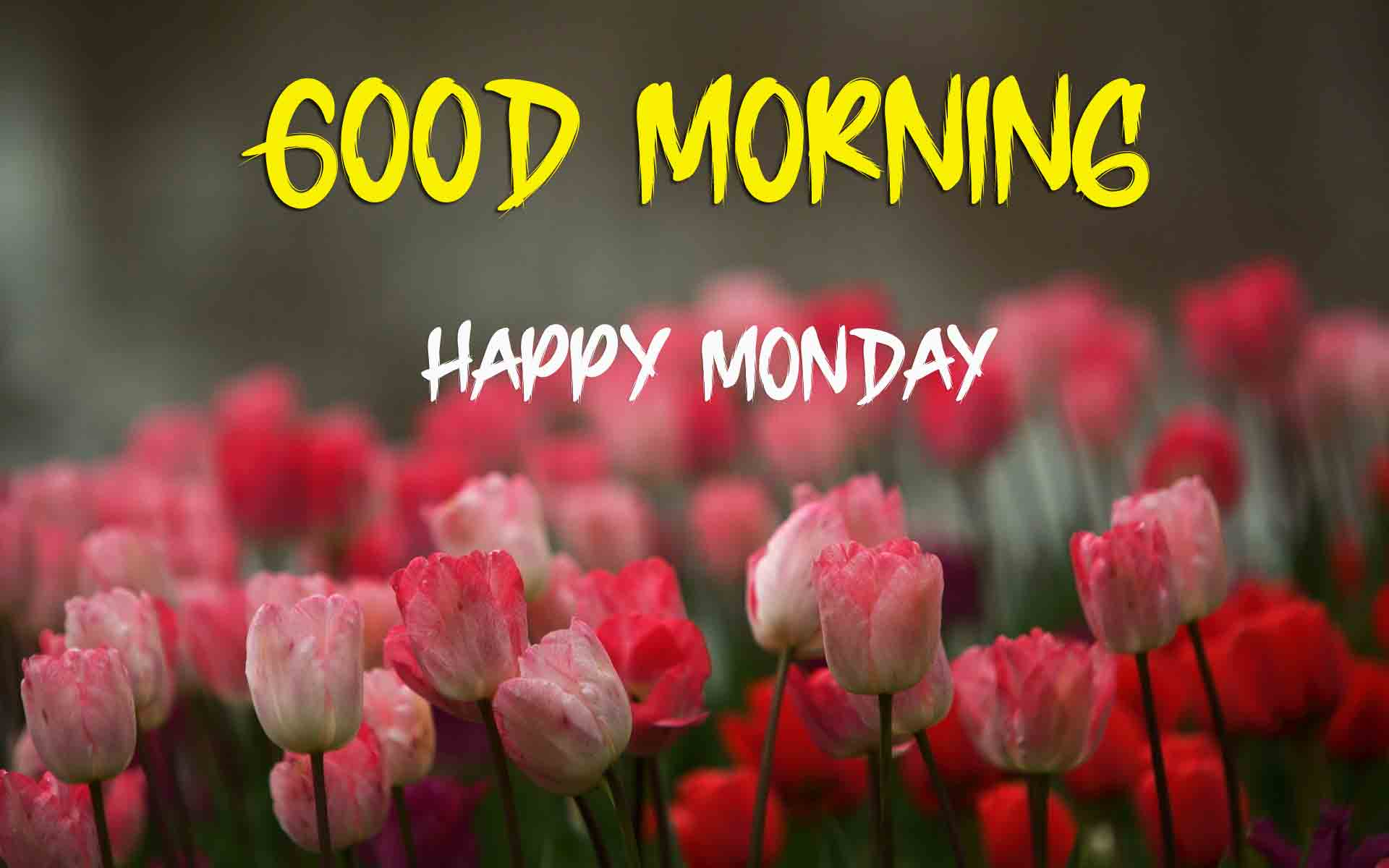 Best Monday Good Morning Images photo hd