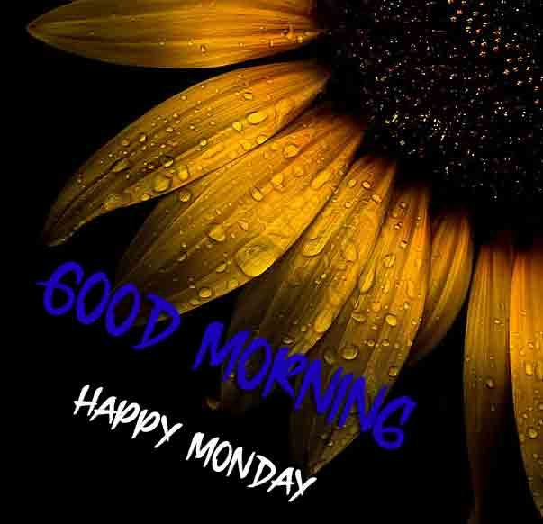 Best Monday Good Morning Images photo pics for free download