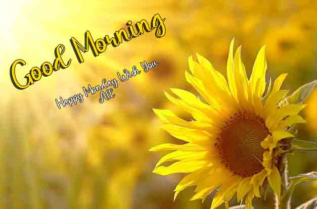 Best Monday Good Morning Images photo pictures for hd