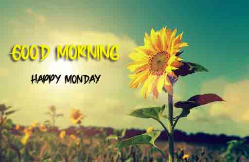 Best Monday Good Morning Images pics photo download hd