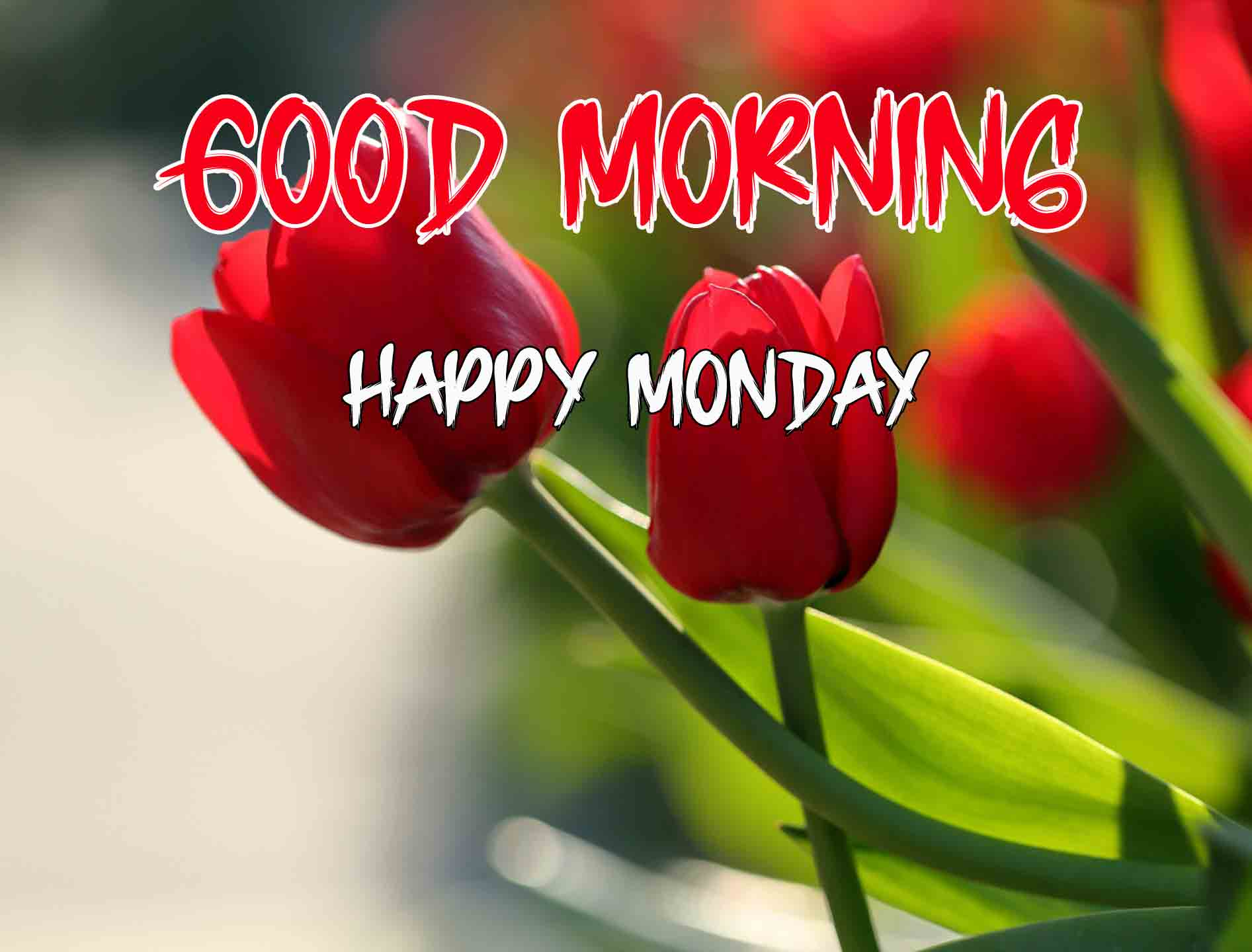 Best Monday Good Morning Images pictures photo free download