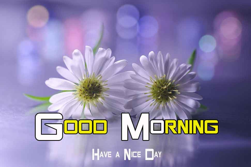 Flower good morning have a great day pics