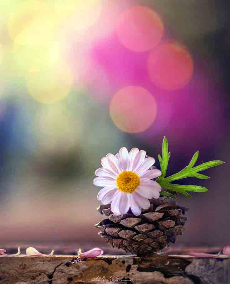 Free Flower Whatsapp Dp Images Pictures Download