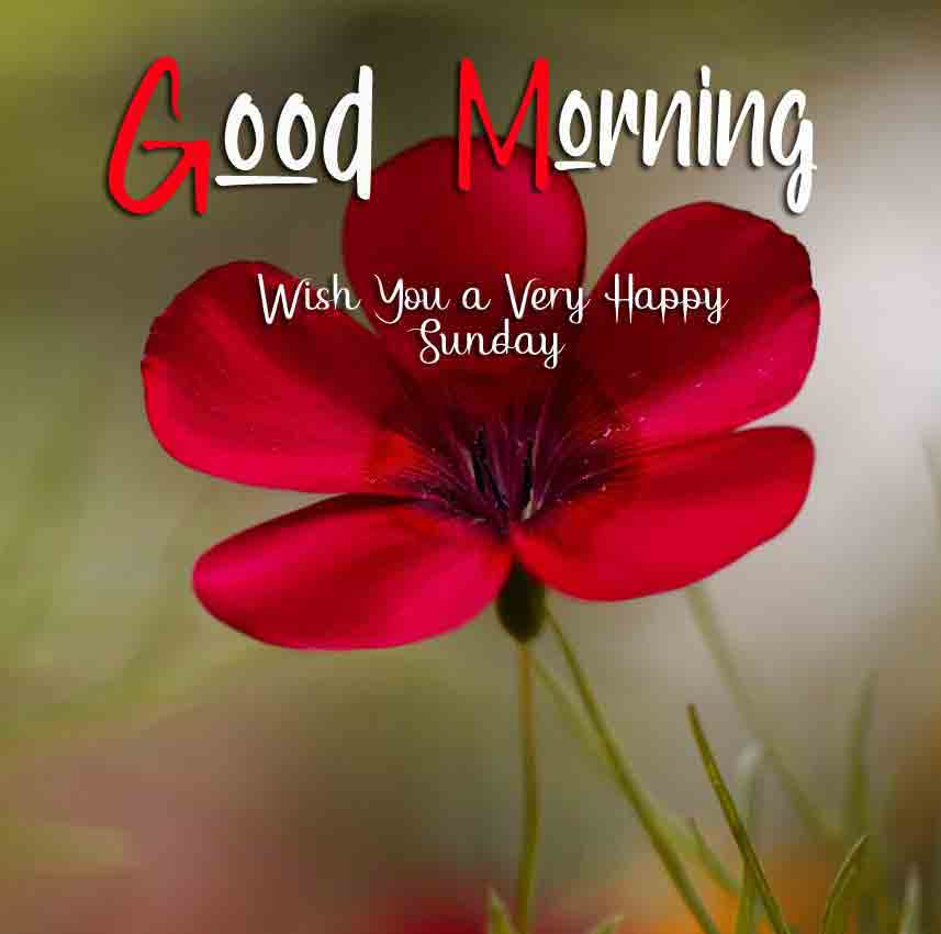 Good Moring Happy Sunday pics wallpaper download for whatsappp