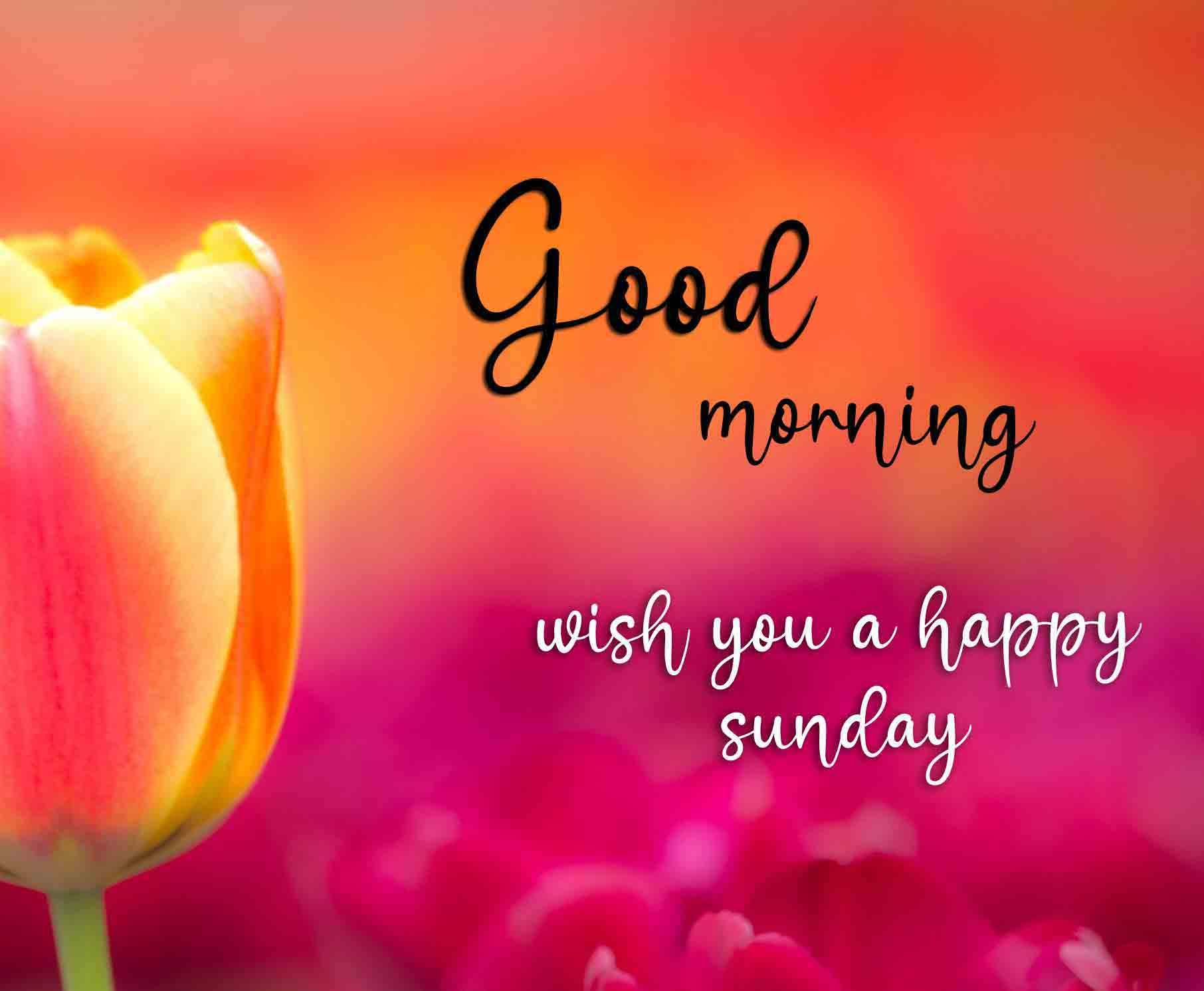 Good Moring Happy Sunday pictures free d