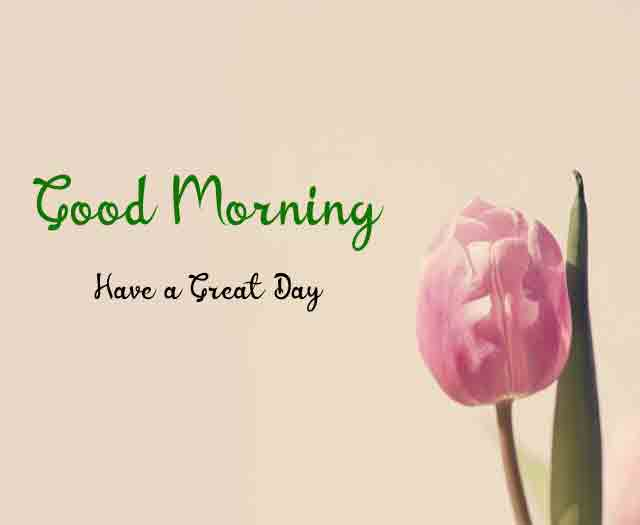 Good Morning tulips flower images hd