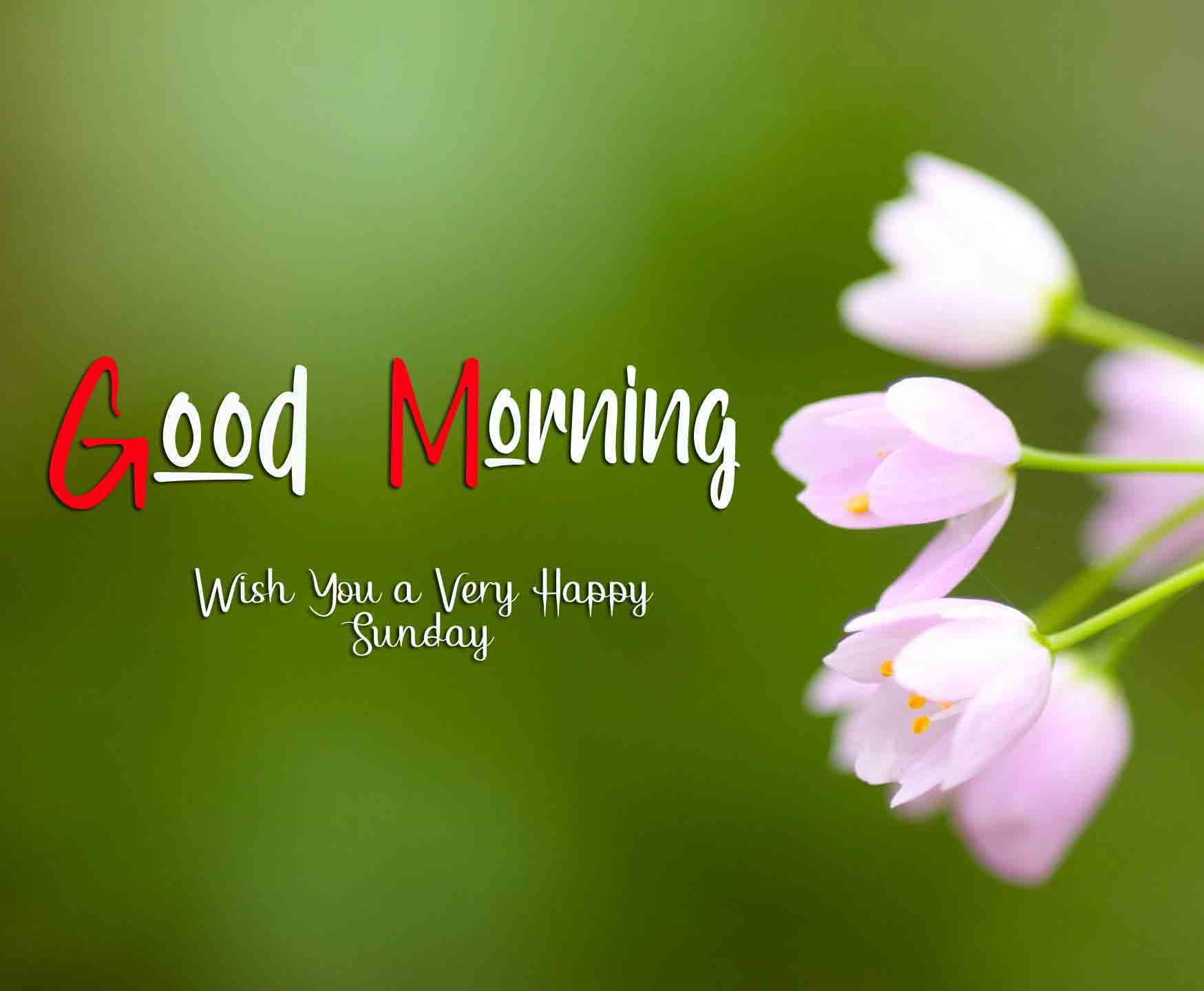 Latest Good Moring Happy Sunday pictures hd