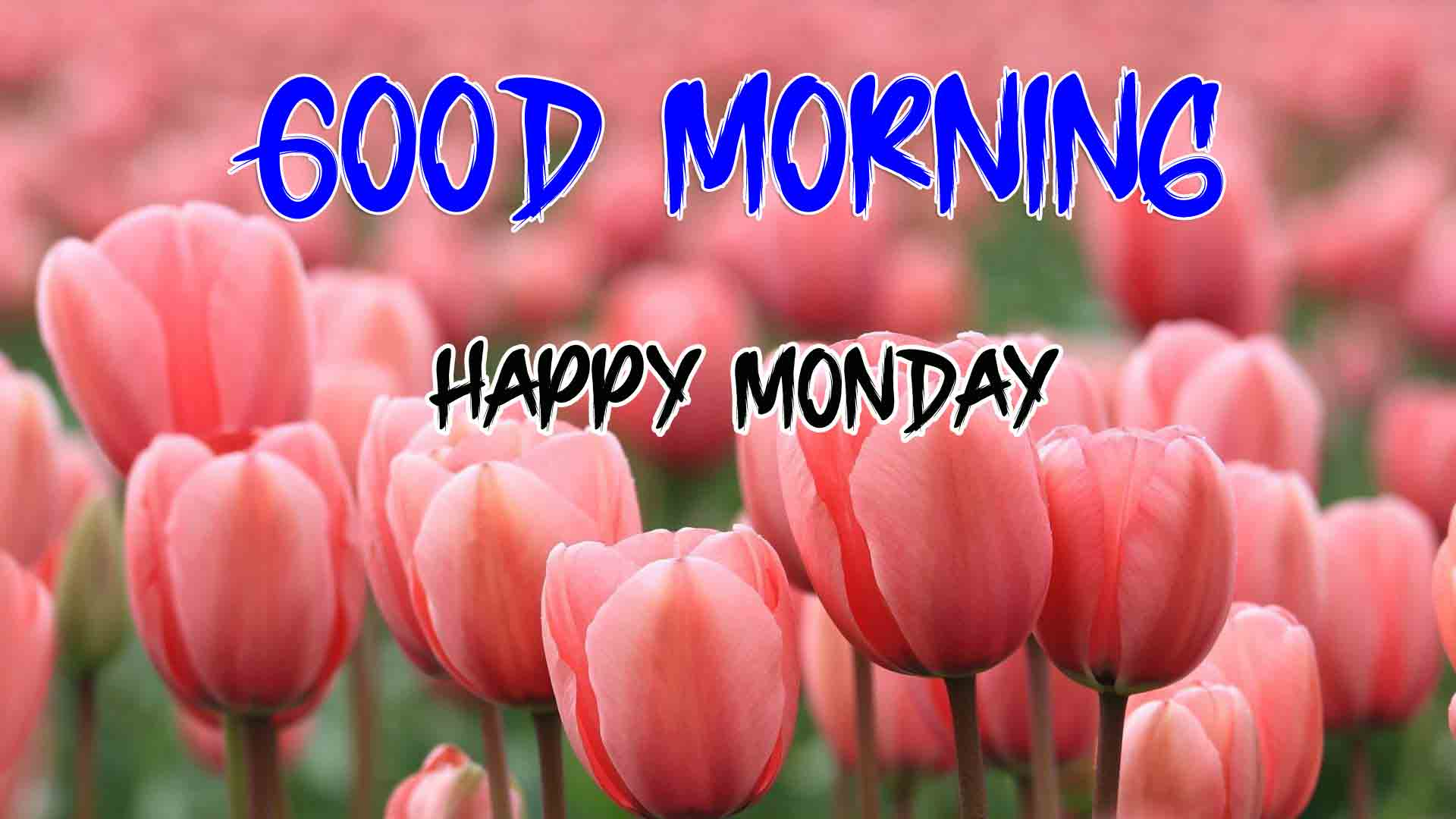 Monday Good Morning Images free hd for whatsapp