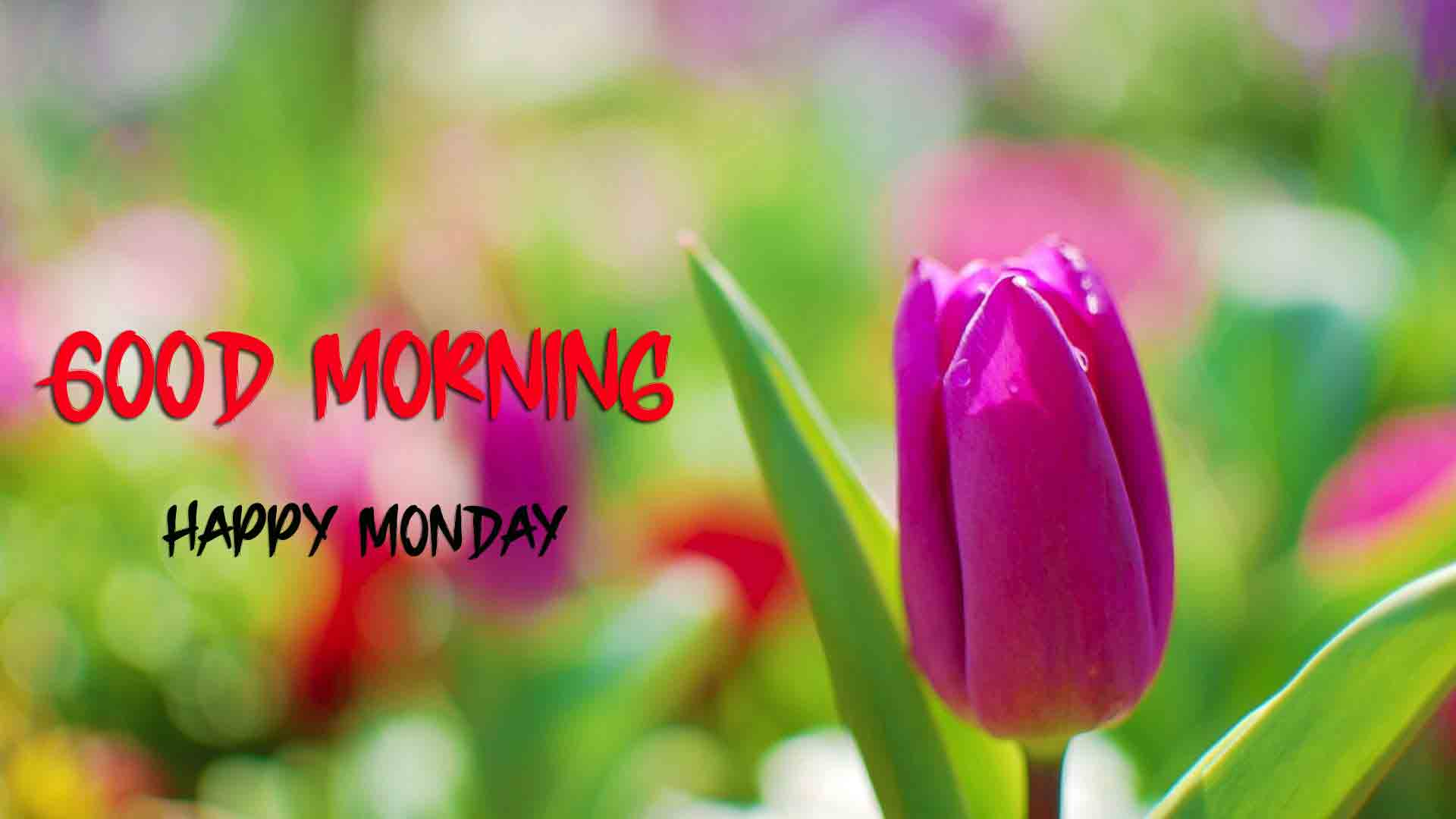 Monday Good Morning Images photo for friends