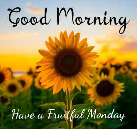 Monday Good Morning Images picctures for download